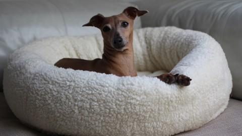 Produkttest [Hundekorb] Himmlisch schick gebettet mit JULINKA