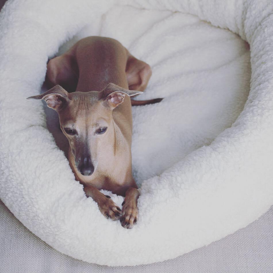 Lola's Hundeleben beim Hundeblog miDoggy