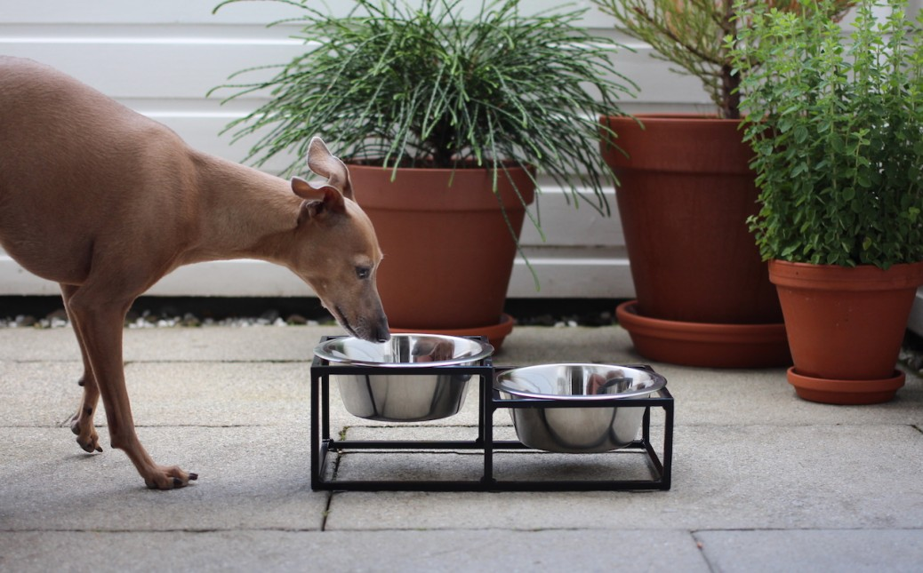 Miski Loft Hundenapf cool Test