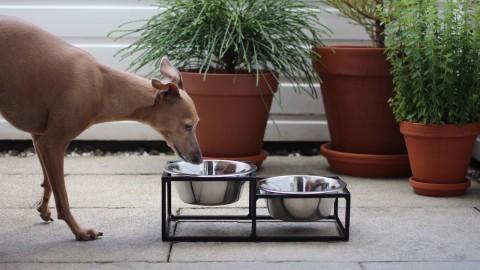 Garantiertes Loft-Gefühl durch einen Hundenapf?