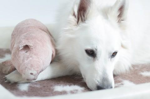 [Lola's Freunde lieben] das Schwein von IKEA