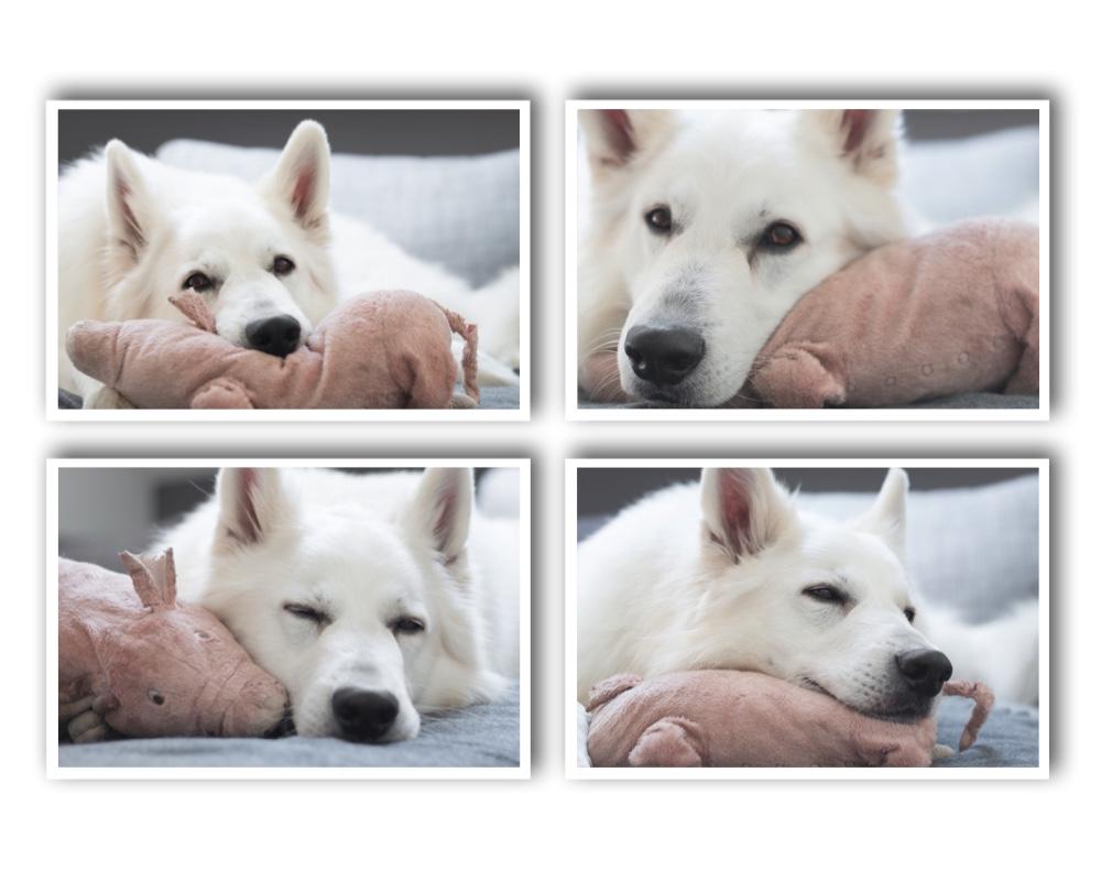 Pfotenliebling liebt das Schwein von IKEA