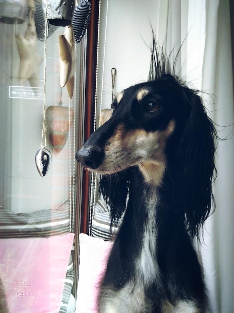 Supagirl Sressless Dogs
