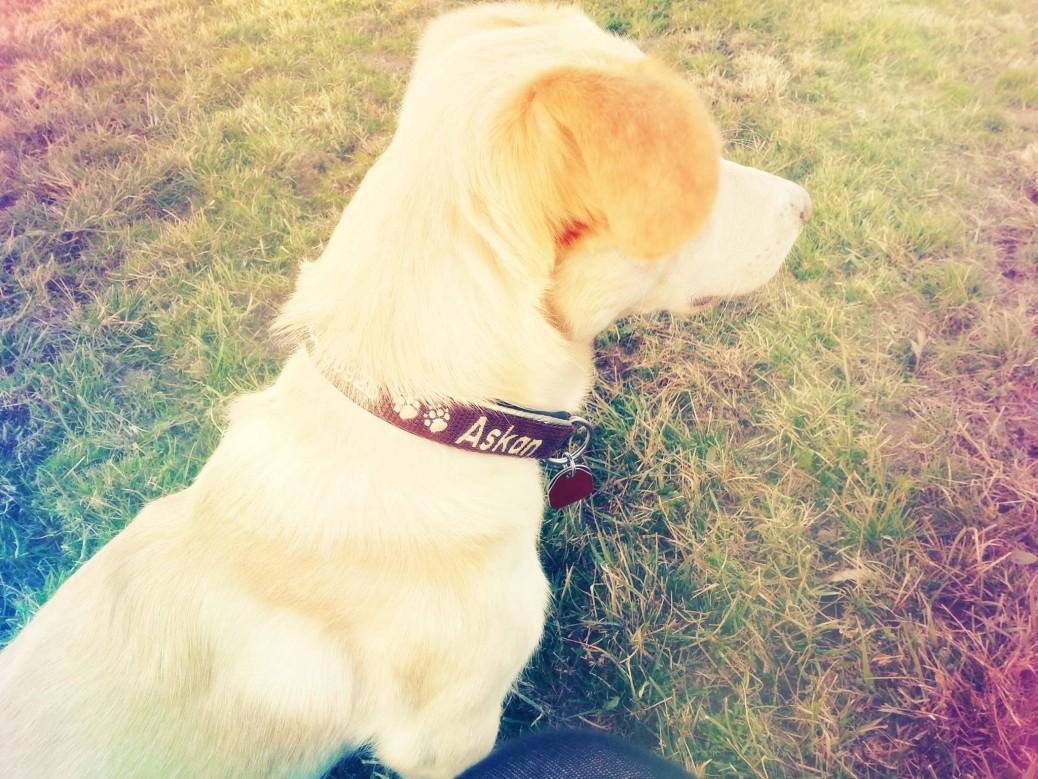 Verwauzt und zugebellt Lola's Freunde lieben das Halsband von meinhalsband.de