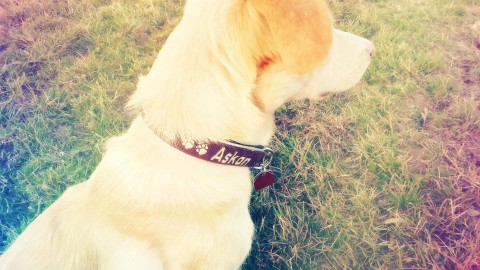 [Lola's Freunde lieben] Leine und Halsband von meinhalsband.de