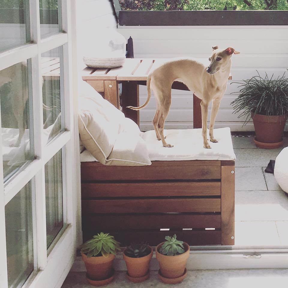 Balkon mit Hund miDoggy