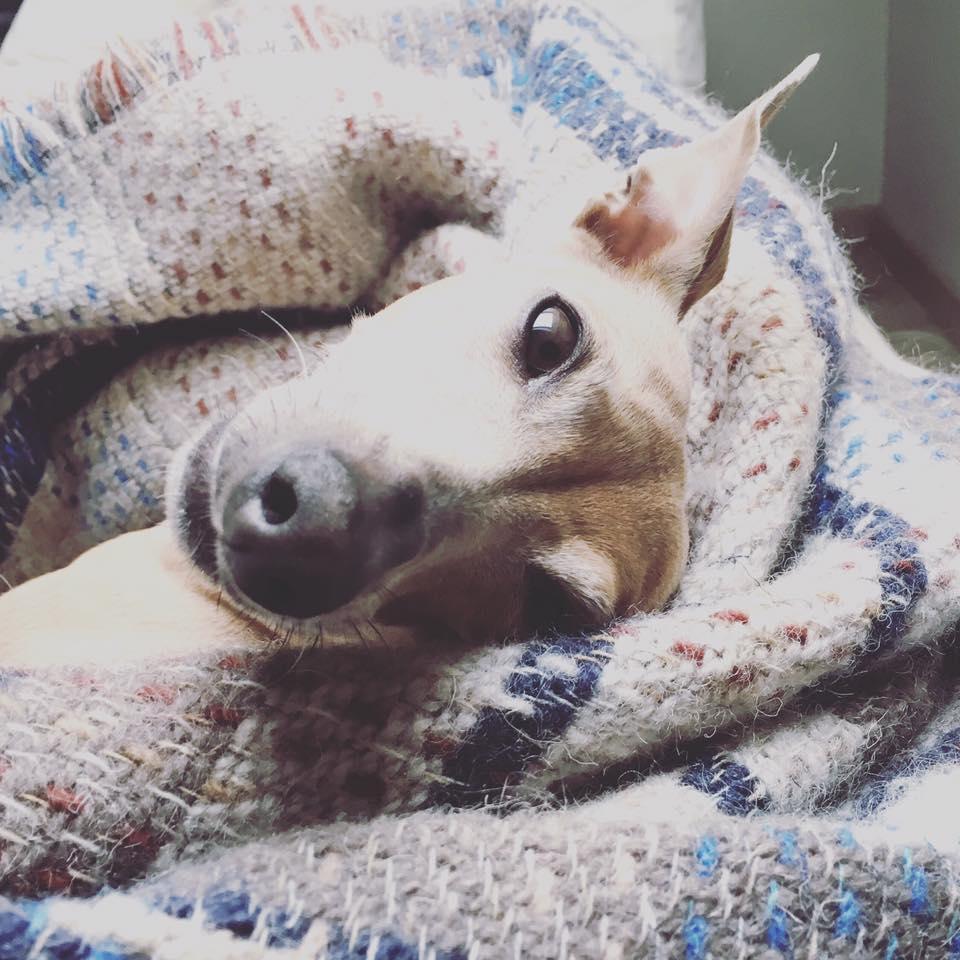 Die Woche beim Hundeblog miDoggy