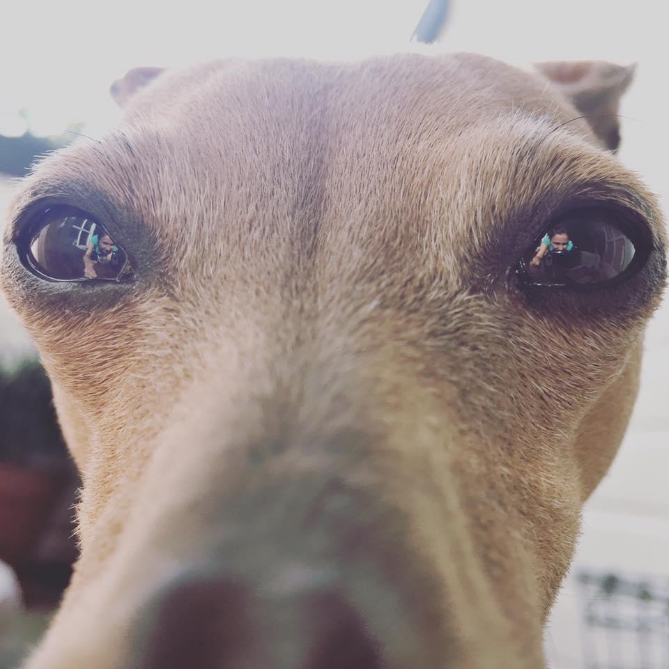 Rückblick auf die Woche beim Hundeblog miDoggy