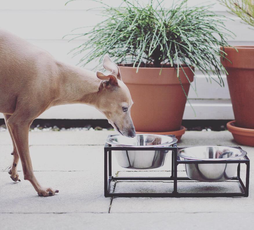 Unsere neuen Hundenäpfe miDoggy
