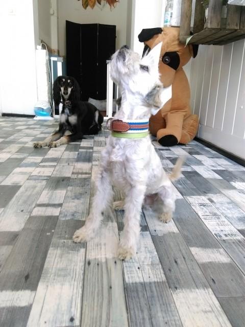 Den richtigen Hundefriseur finden