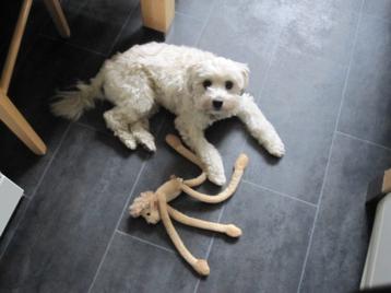 Guter Hundefriseur