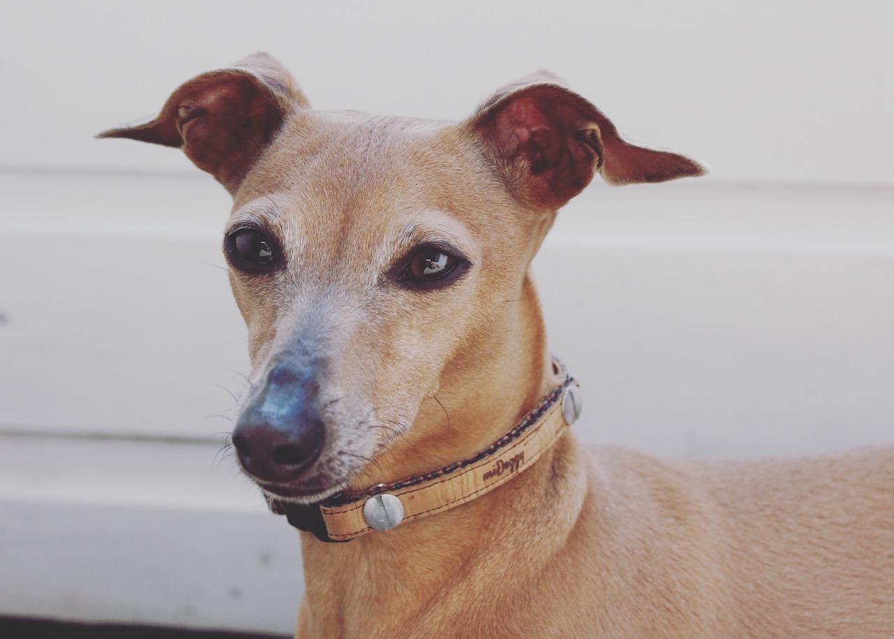 Halsband Hund Armband Boho Kork Miero