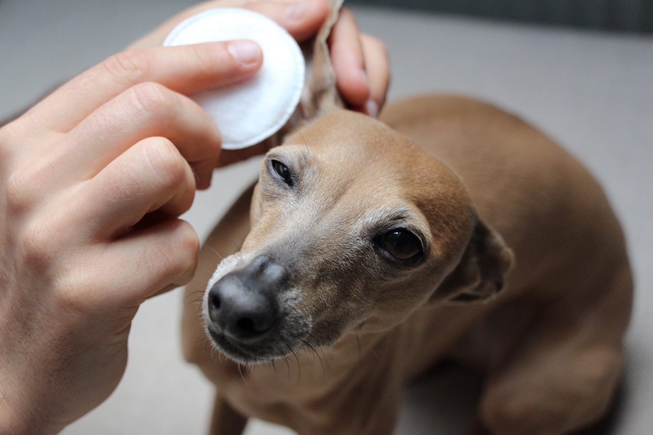 Natürliche Ohrenpflege Aniforte miDoggy