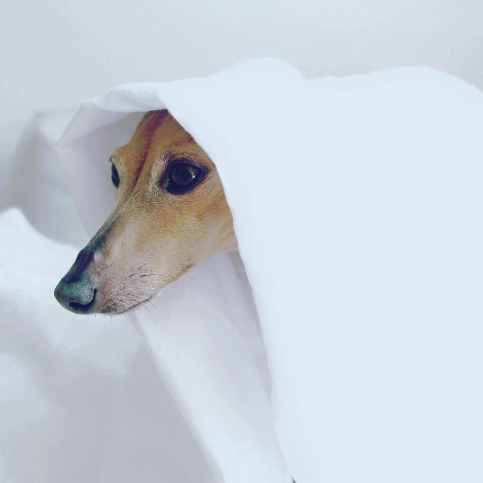 Samstag ghost dog.