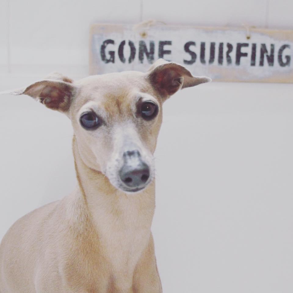 Donnerstag Surfer-Mädel