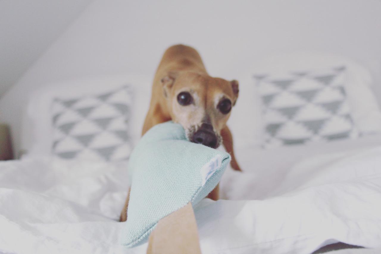 Hundespielzeug Wurfspielzeug Hund JULINKA ökologisch nachhaltig