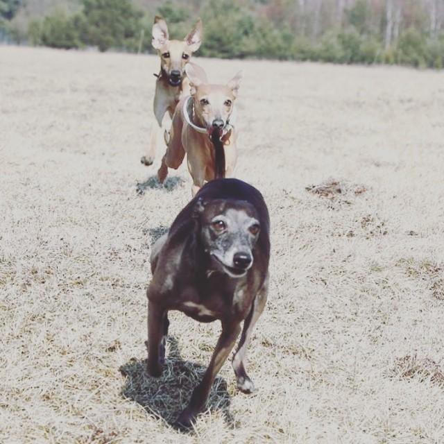 Sommerhunde genießen den Herbst Herbstipps für Hunde