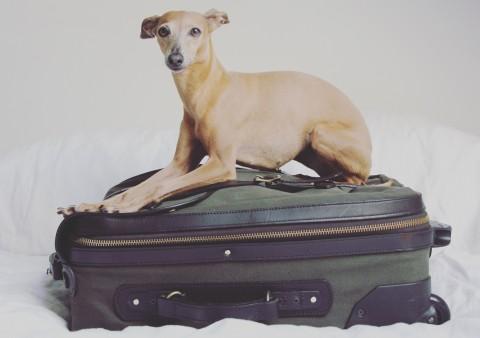 Lola das erste Mal am Meer – oder ich packe des Windspiels Koffer.