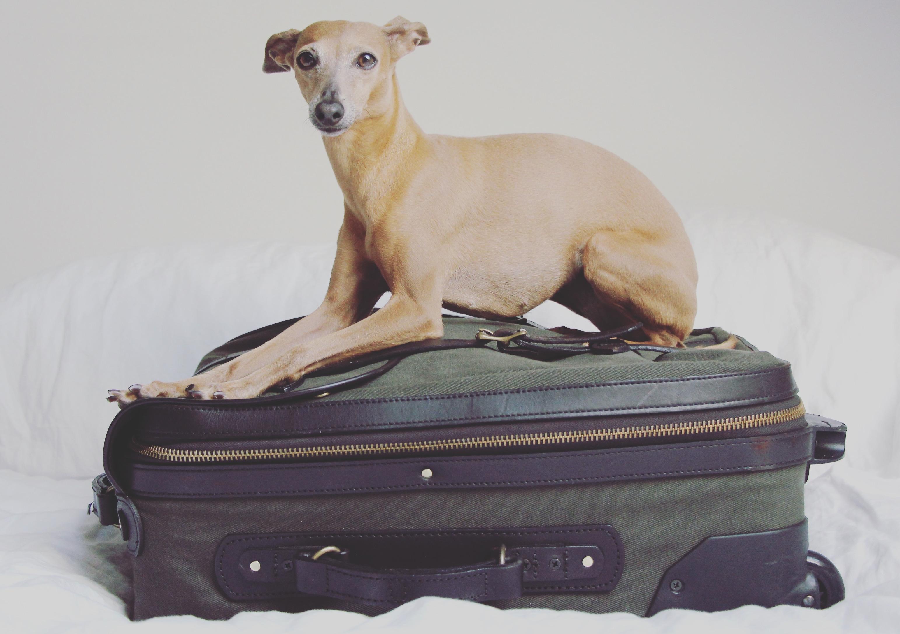Packlisten für Hunde im Urlaub
