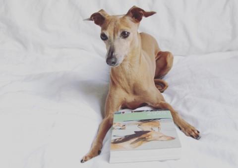 Buchtipp: Ein FotobuchRoman rund um 2924 Hunde