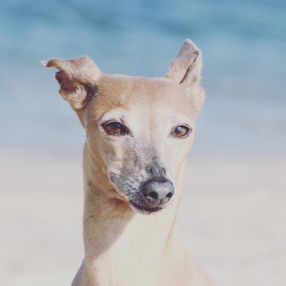 Dienstag: Wir vermissen die Sandkörner auf der Haut...