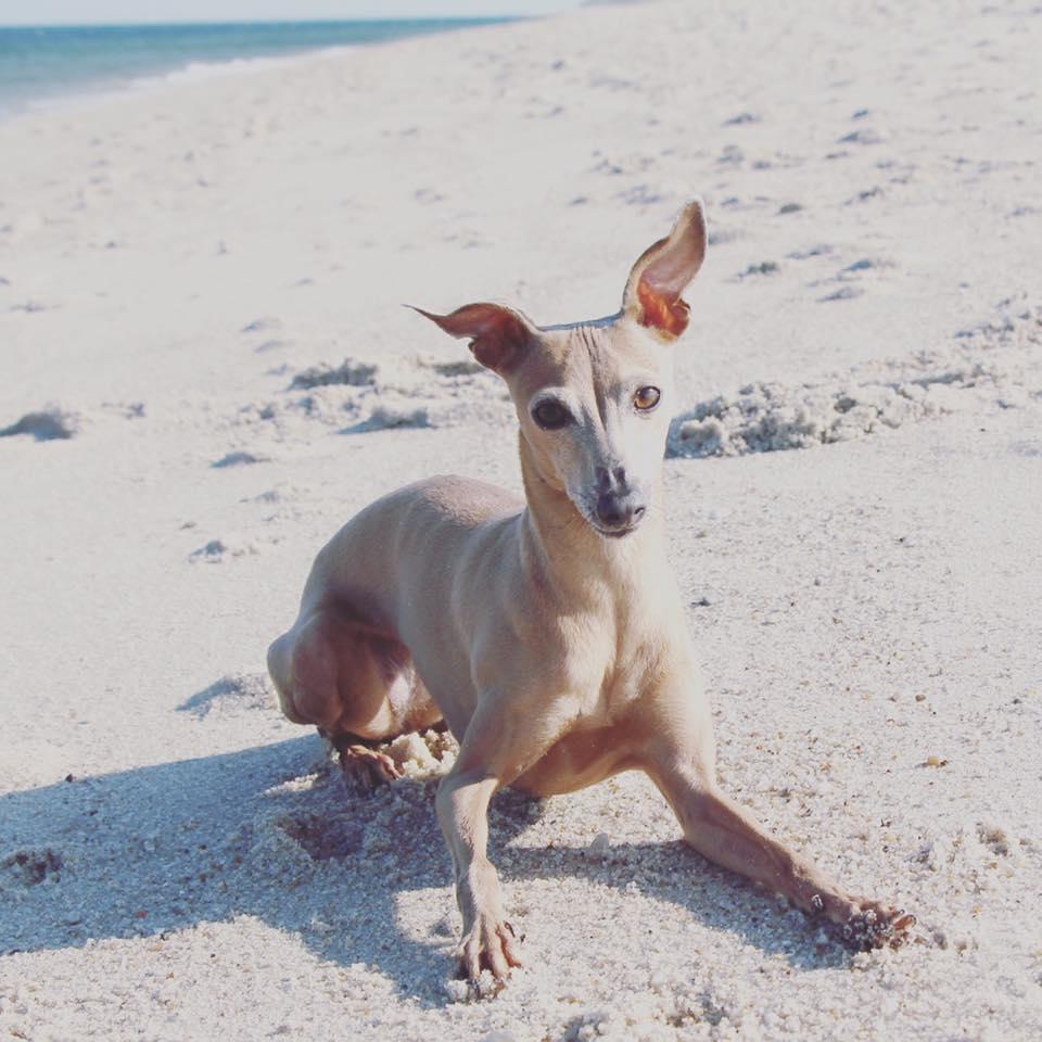 Donnerstag: Lola steht der Strand ziemlich gut, oder?