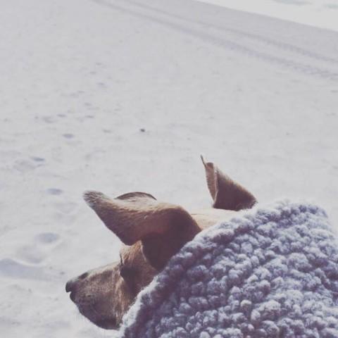 25 Bucket List Punkte für Dich und Deinen Hund