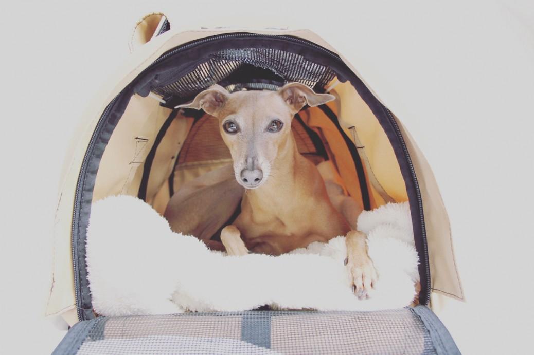 gute-flugtasche-hunde-empfehlung-erfahrung-sturdibag-9104