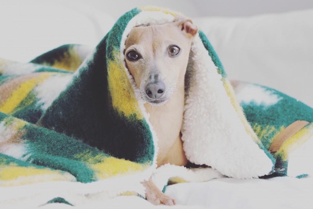 schlafsack-hund-happystaffy-me-boho-inka-erfahrungen-9353