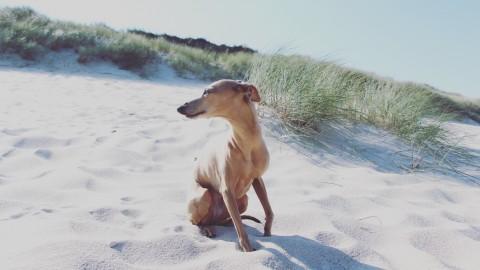 Unsere Tipps für einen wunderbaren Hundeurlaub auf Sylt