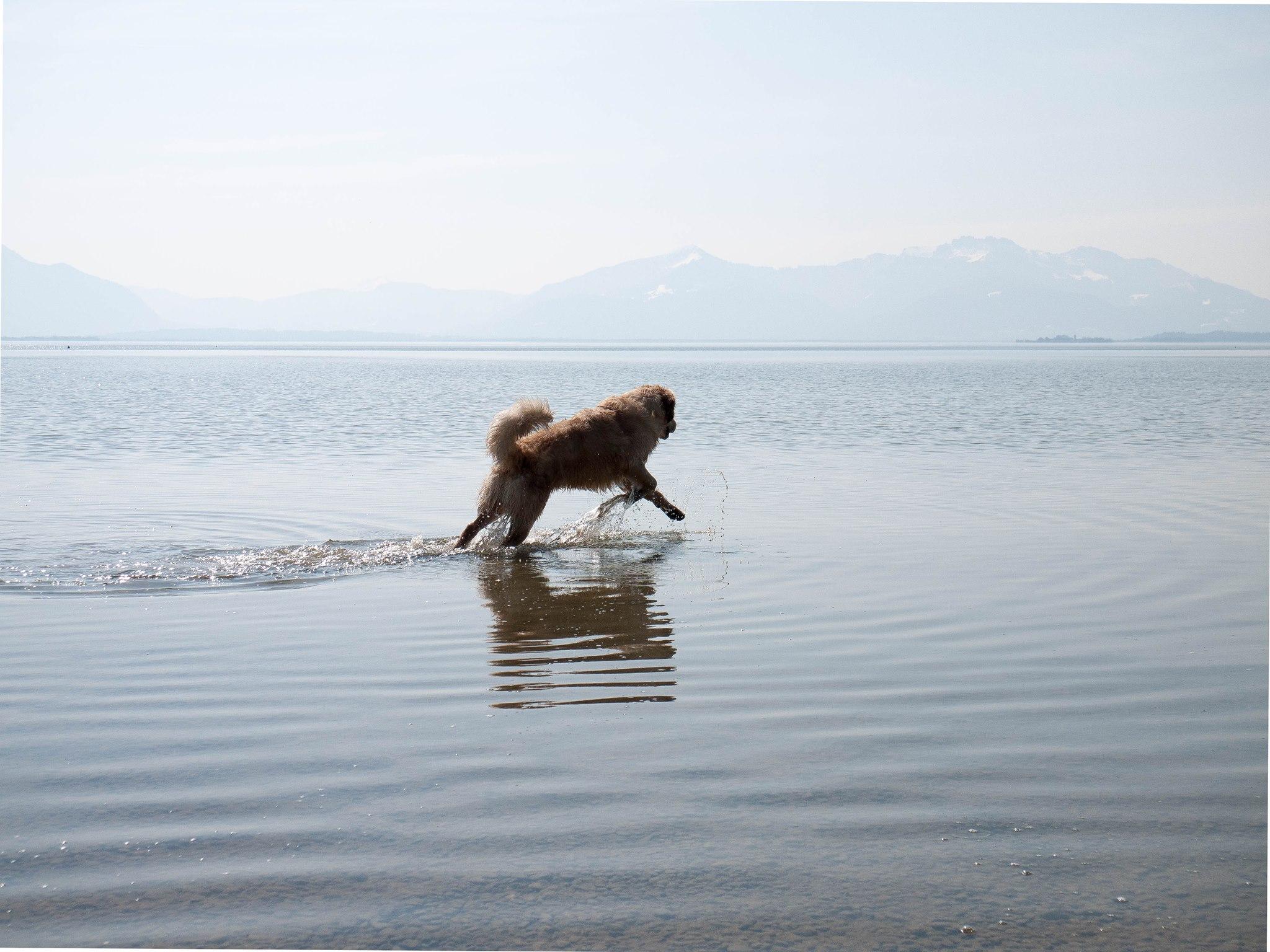 VetPhysio Landshut Physiotherpie Hund Pferd Erfahrungen