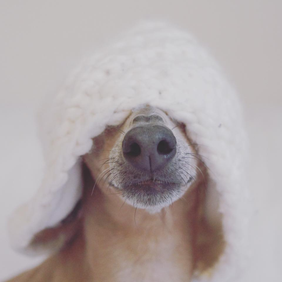 Dienstag: der erste Schnee in Deutschland und Lola's Reaktion darauf