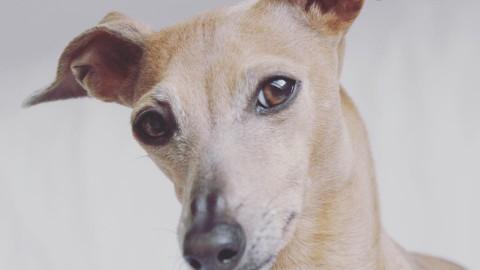 1…2…3…write! Die ersten Schritte zu einem erfolgreichen Hundeblog.