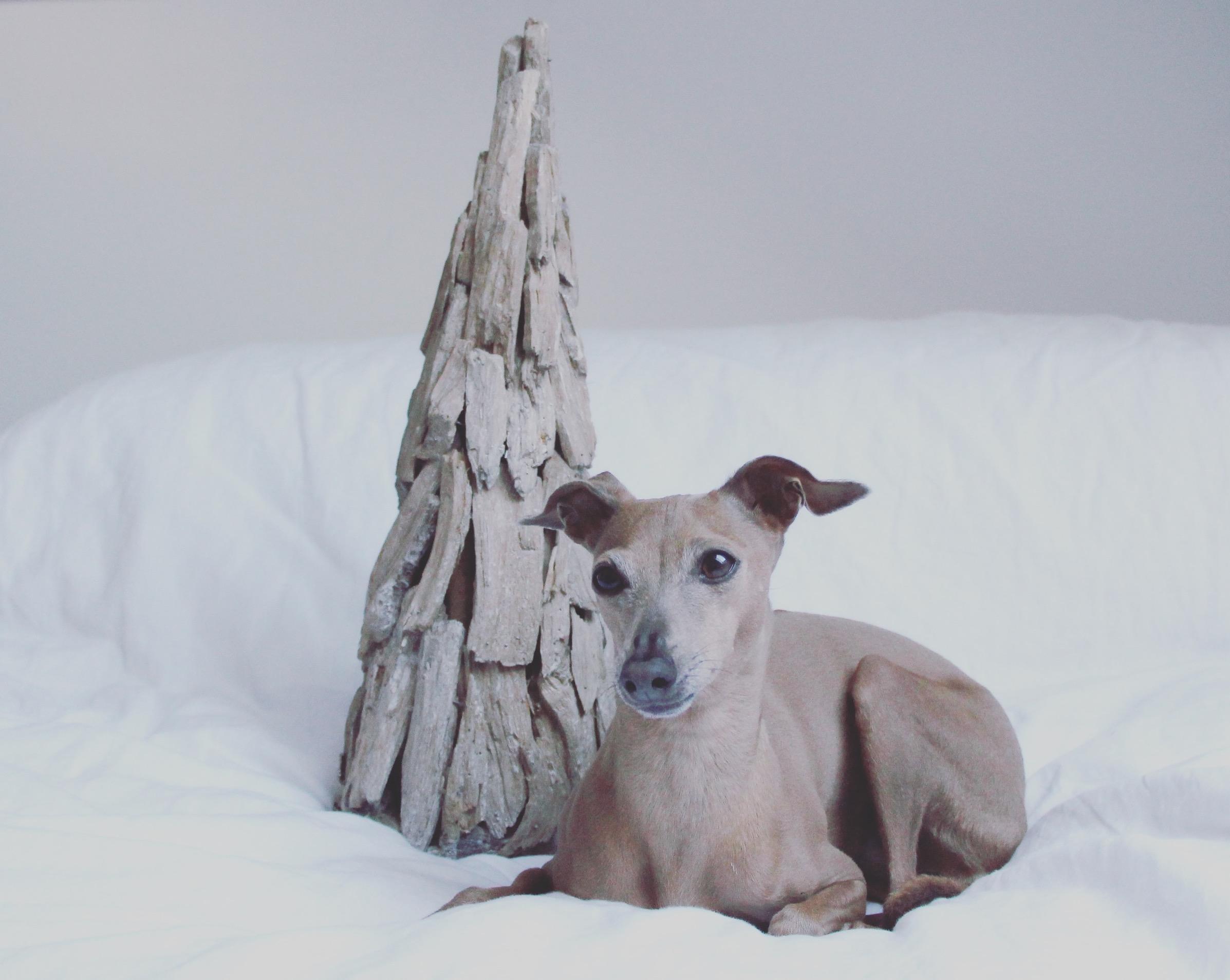 entspanntes-weihnachten-mit-hund