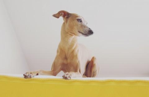 Warum Hunde im Bett auf einer eve Matratze schlafen sollten [für Euch getestet]