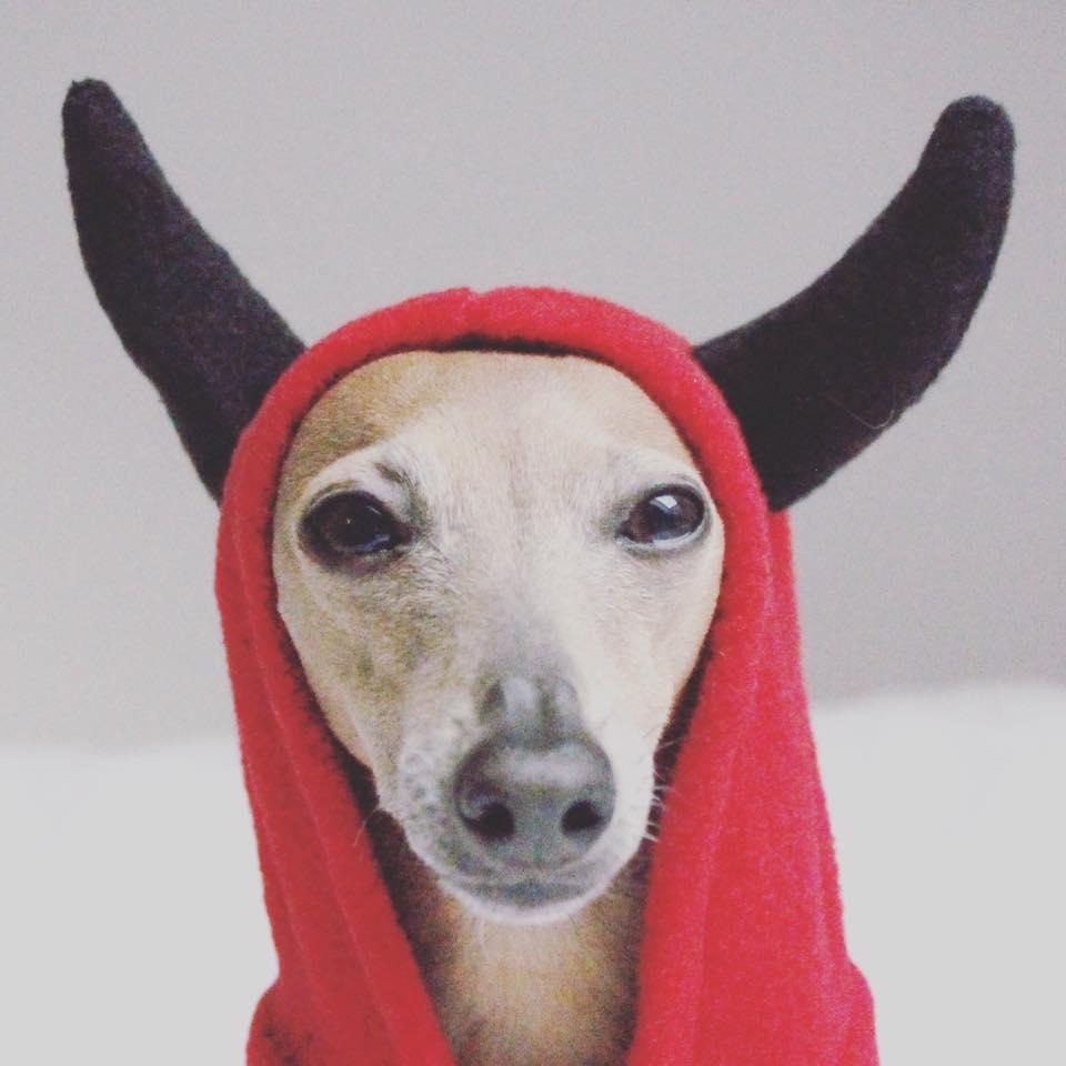 Montag: Happy Halloween!!!