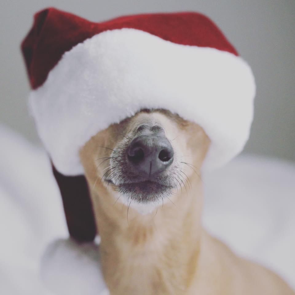 Dienstag: Happy St Nicholas Day!!!