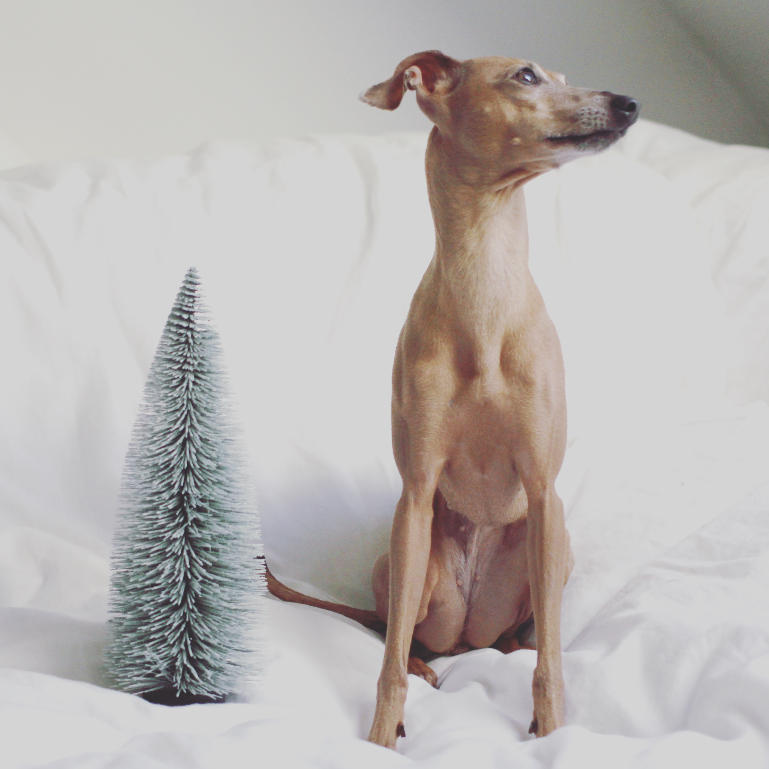 Samstag: Christmas? ...not yet...