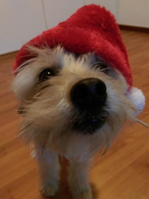 [eDgars Kolumne…nicht] Selfmade with love – Trainingstreats für besondere Hunde