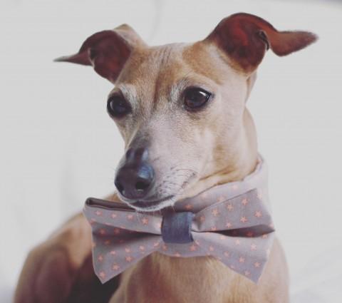 Warum eine Schleife am Hund lebenswichtig sein kann [für Euch getestet]