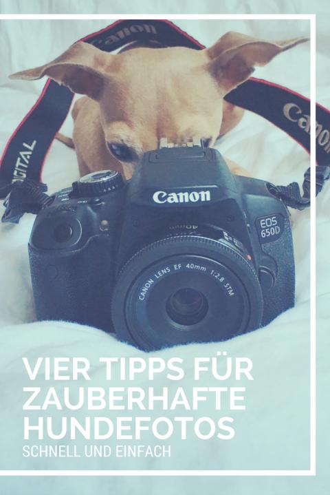4 einfache Tipps für zauberhafte Fotos von Euren Hunden