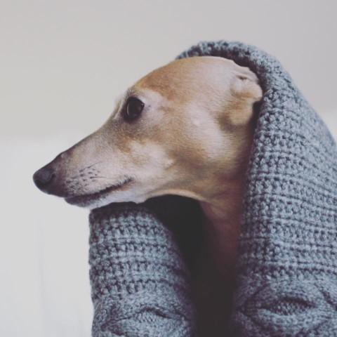 Kooperationen – das gilt es als [Hunde-] Blogger zu beachten
