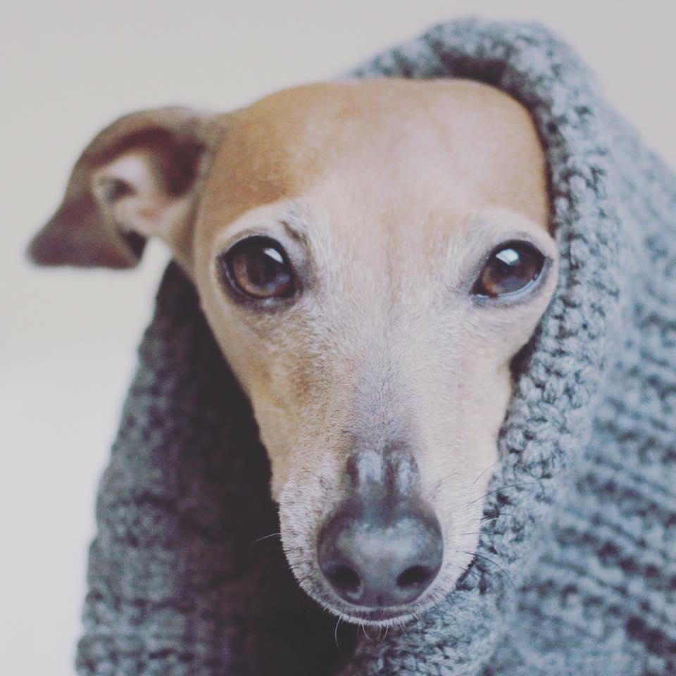 Sonntag: Sommer, warme Luft, Abendhimmel, auf dem Balkon sitzen, den Hund beim Schlummern beobachten...darauf hätte ich jetzt Lust :)
