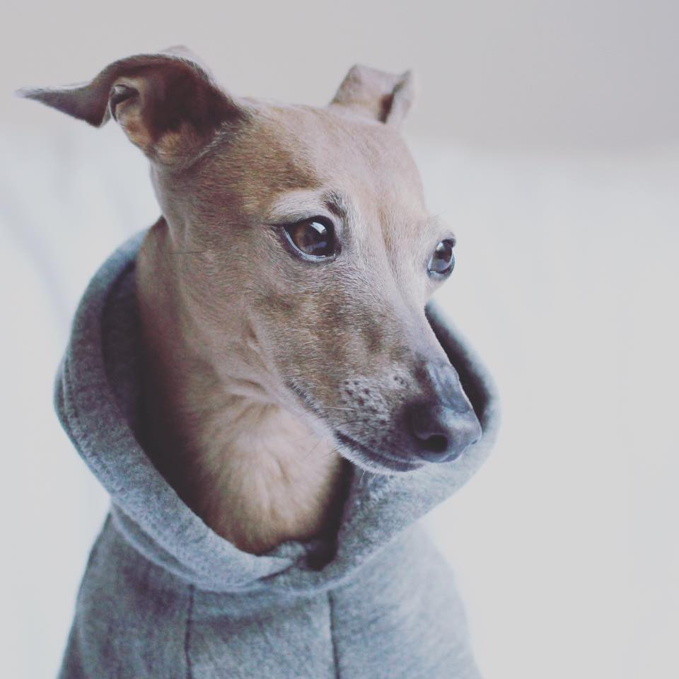 Saturday means hoodie in Lola