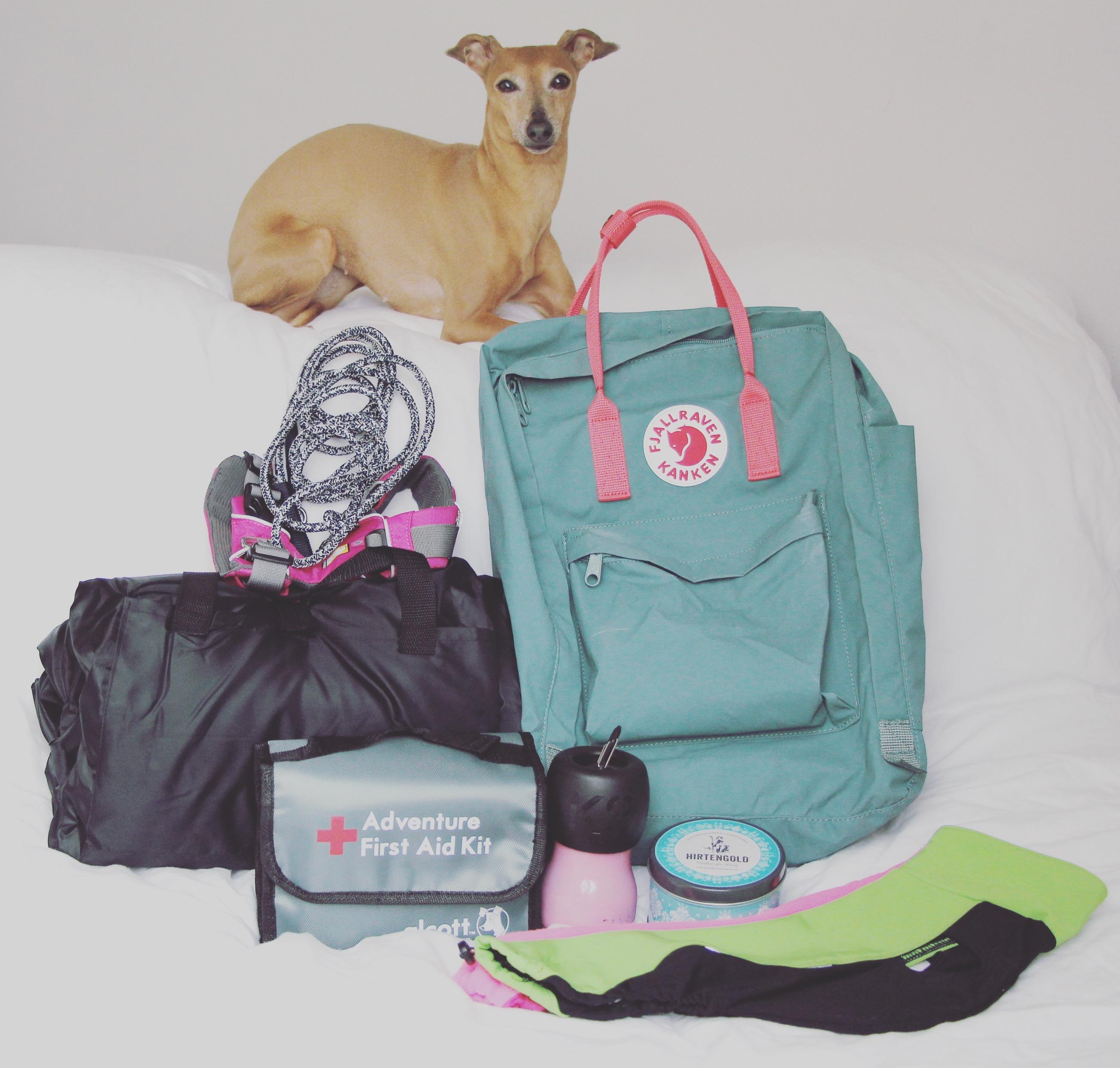 Packliste für eine Wanderung mit Hund 0999