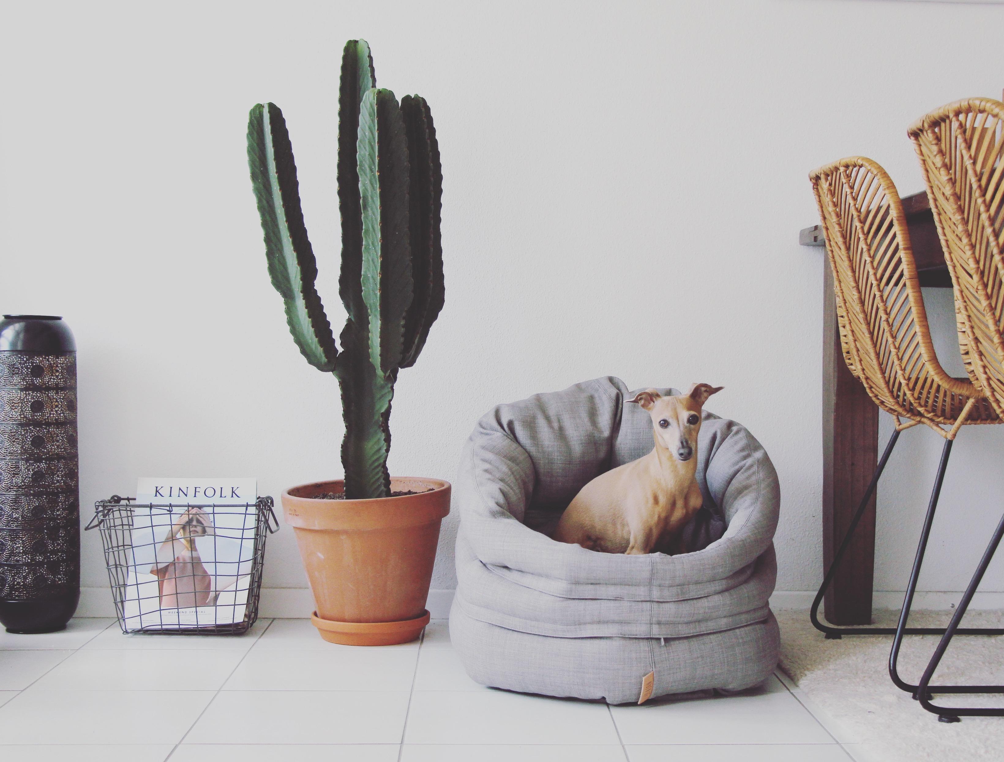 4 Tipps für einen entspannten Hund im Büro Hundebett besonders 1364