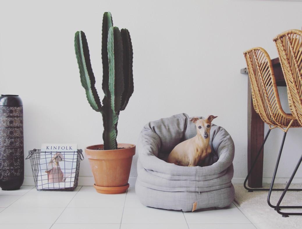 4 tipps f r einen entspannten alltag mit hund im b ro. Black Bedroom Furniture Sets. Home Design Ideas