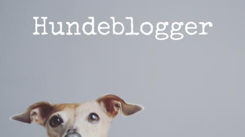 Die Hundeblogger der miDoggy Community