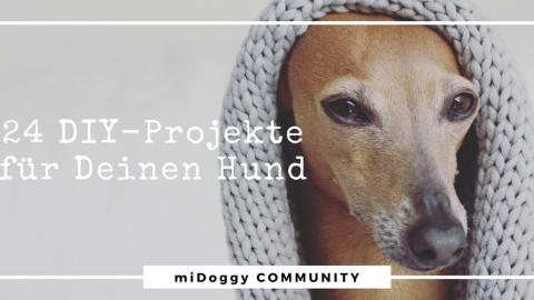 24 Selbermachen Projekte für Deinen Hund