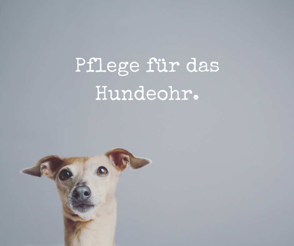 Pflege für das Hundeohr miDoggy